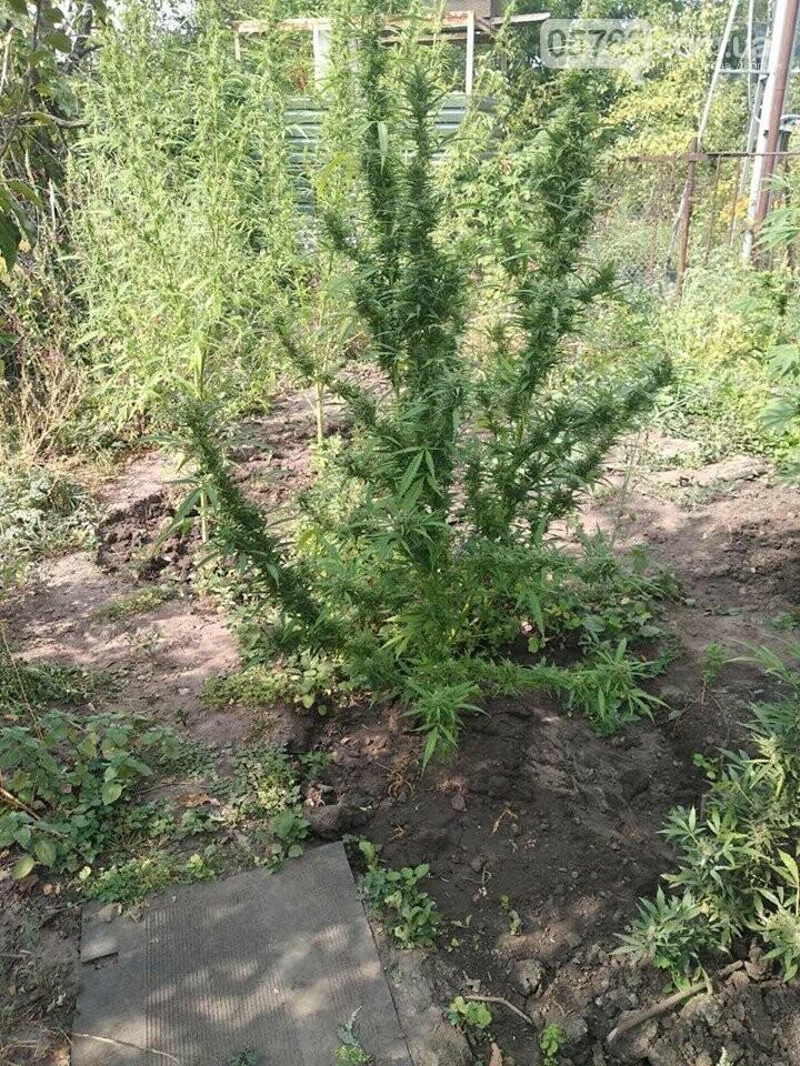 Житель Дергачевского района дома выращивал наркотики, фото-3