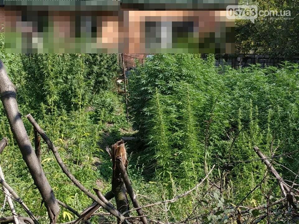 Житель Дергачевского района дома выращивал наркотики, фото-4