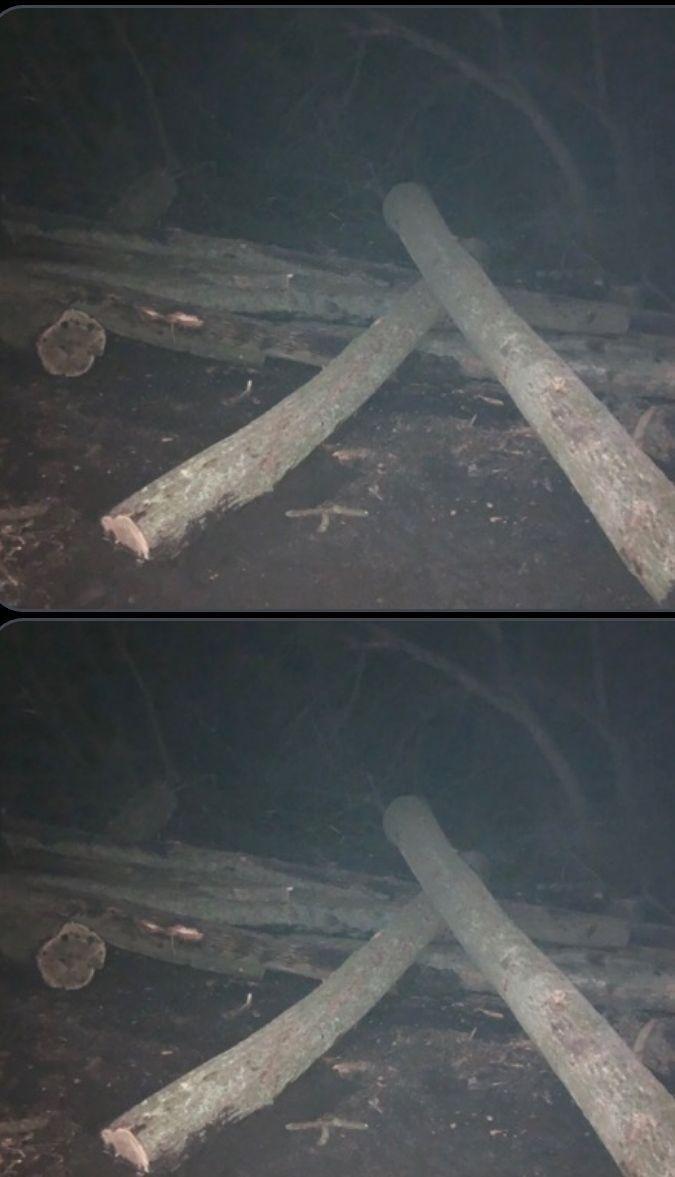 Дергачівською прокуратурою припинено діяльність групи осіб з незаконної вирубки деревини, фото-2
