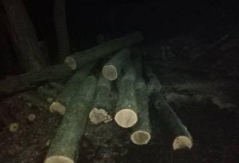 Дергачівською прокуратурою припинено діяльність групи осіб з незаконної вирубки деревини, фото-1