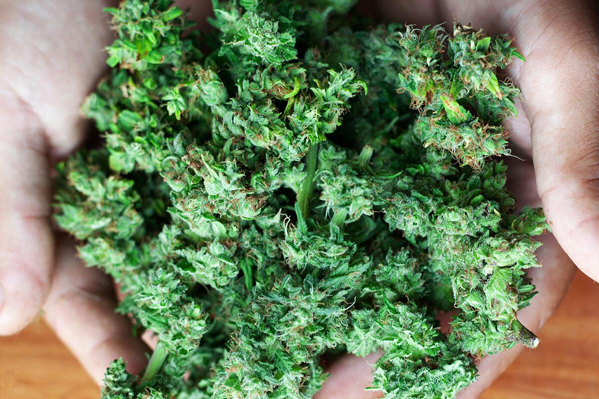 Вред каши из конопли теплицы для выращивание марихуаны